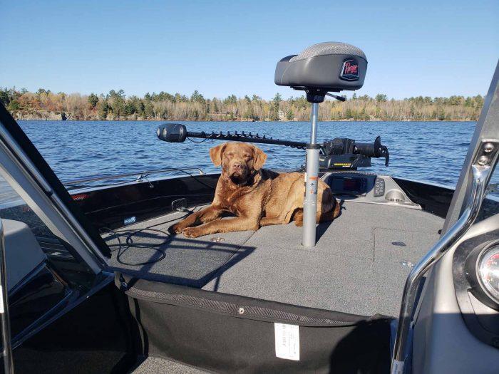 fishing-guide-minnesota-lake-vermilion-28
